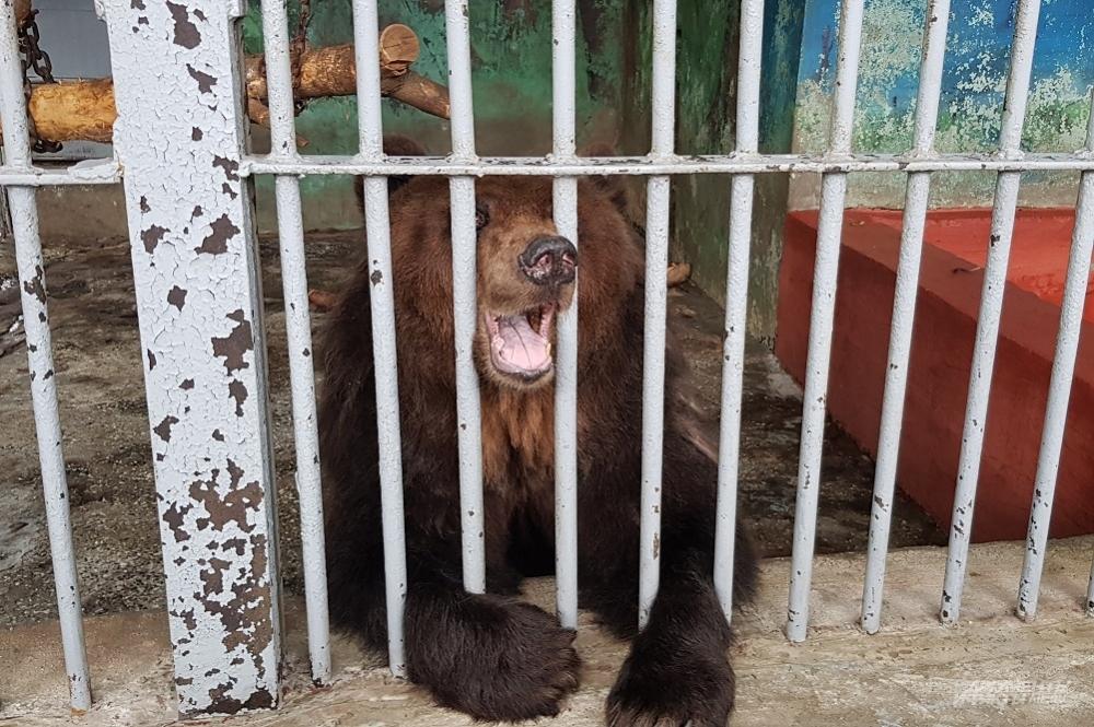 Медведица Машка ест всё, что дают.
