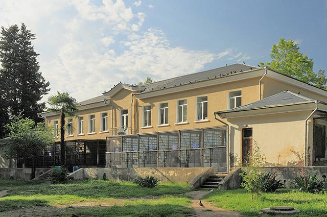 В Сухумском обезьяньем питомнике Илья Иванов работал, пока его не отправили в ссылку в 1930 году.