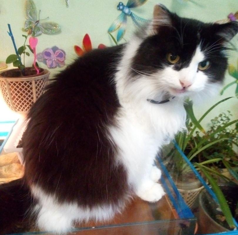 Несмотря на отсутствие зубов, Матисс - весьма симпатичный кот. А в своей спасительнице он души не чает.