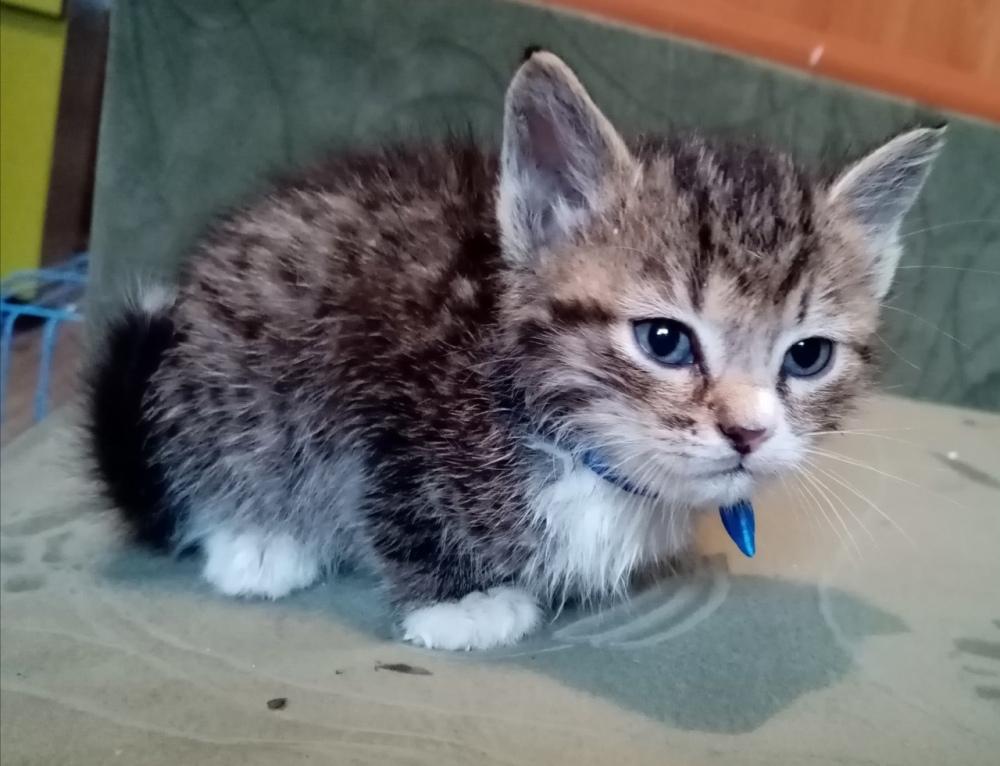 Этому котёнку повезло - он попал в заботливые руки.