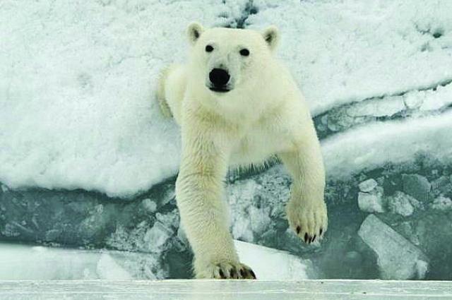 «Кричать и убегать от медведей нельзя. В таких случаях стараемся держаться кучкой, чтобы в глазах мишки выглядеть как большое животное. На толпу они не нападают».