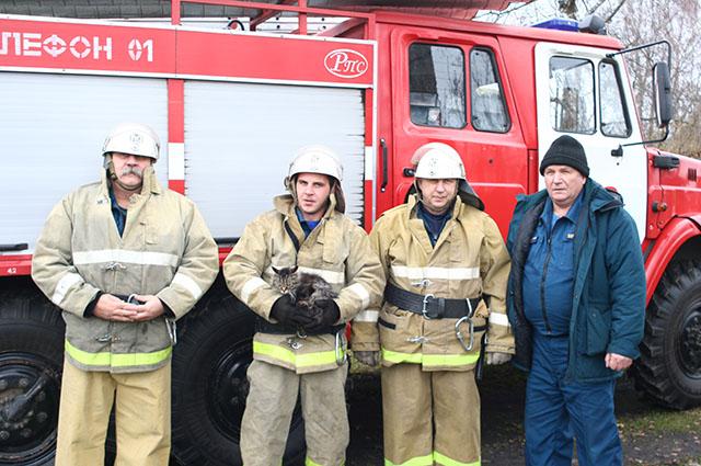 Огнеборцы ПЧ-73 в Каспле спасли застрявшего на дереве кота