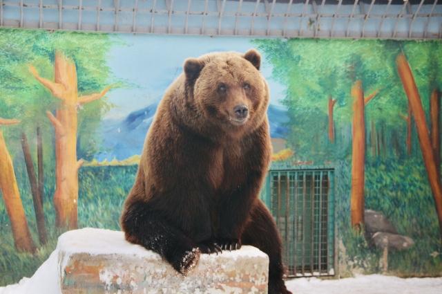 Медведь в тюменском зоопарке.