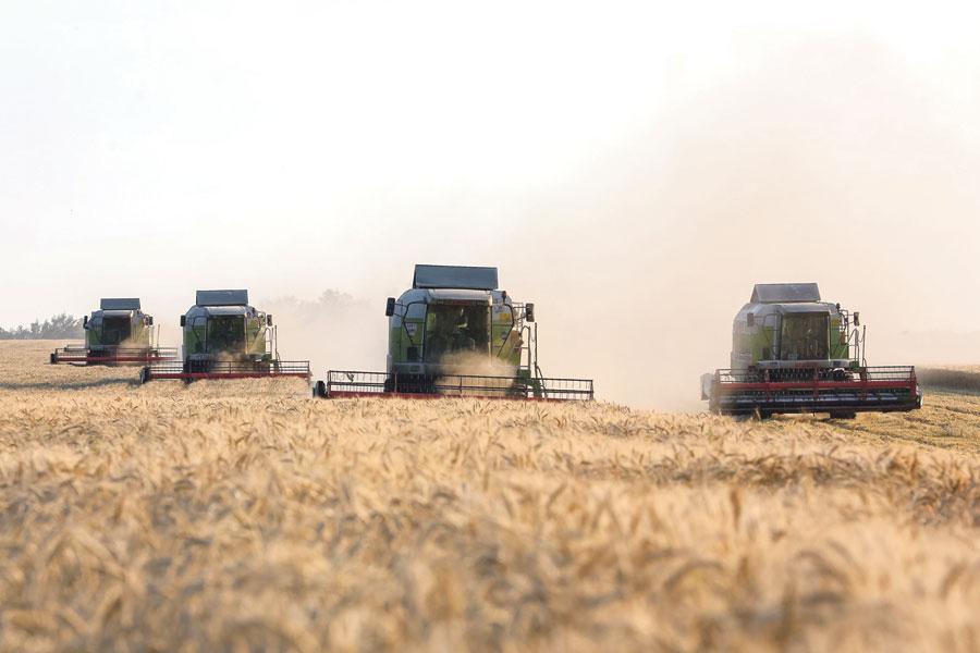 Урожай озимой пшеницы в компании вырос на 20%.