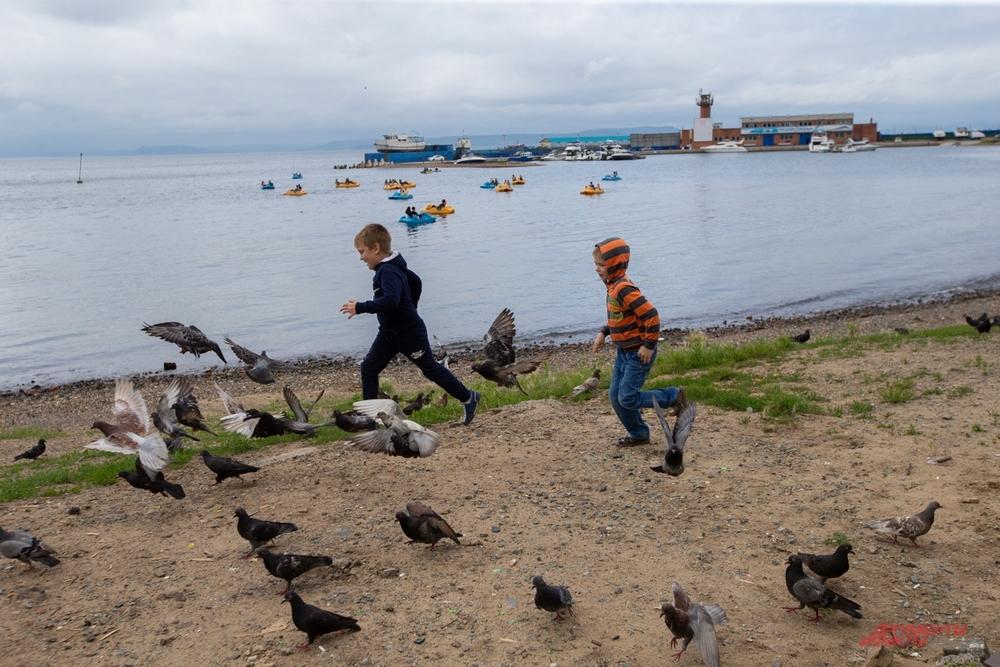 По берегу бескрайнего моря вместе с голубями!