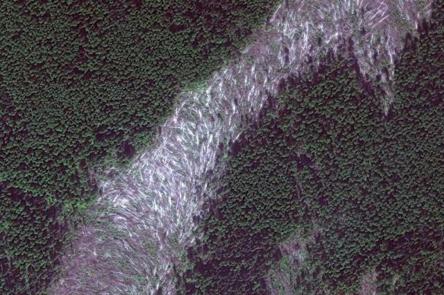 фрагмент космического снимка ветровала, связанного с прохождением смерча 7 июня 2009 г. в Гайнском районе