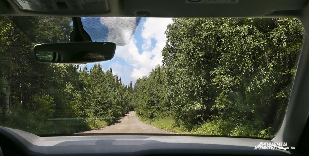 К Чёрной скале через лес ведёт грунтовая дорога.
