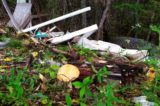 В окружении мусора растут грибы, но есть их не стоит.