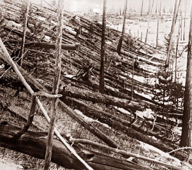 Поваленный лес в районе падения Тунгусского метеорита