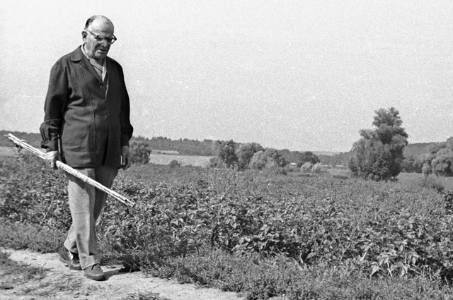 Константин Паустовский на прогулке в окрестностях Тарусы.