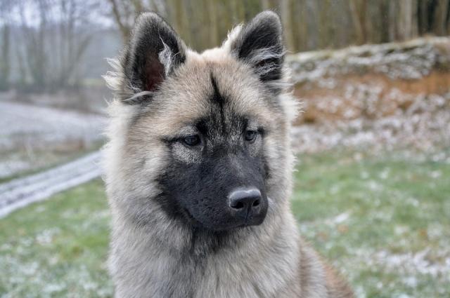 В первую очередь от рук догхантеров страдают собаки-канистерапевты.