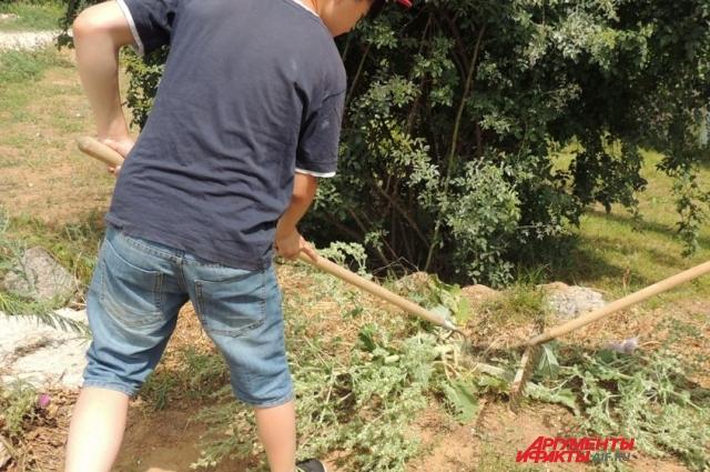 Дети и сейчас пропалывают и убирают сорняки.