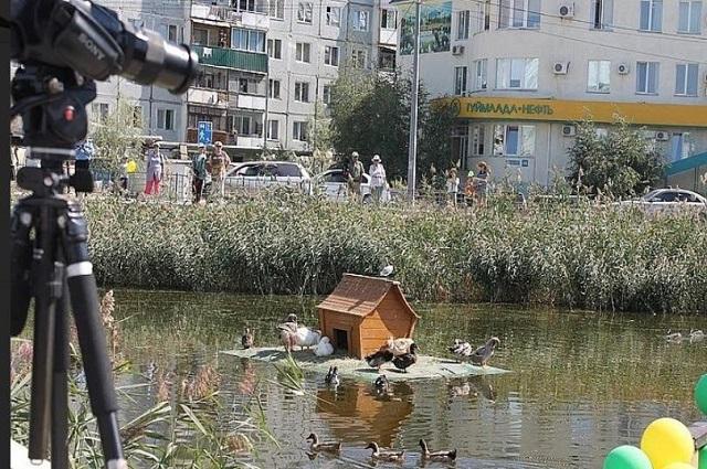 На озере живут различные виды птиц.