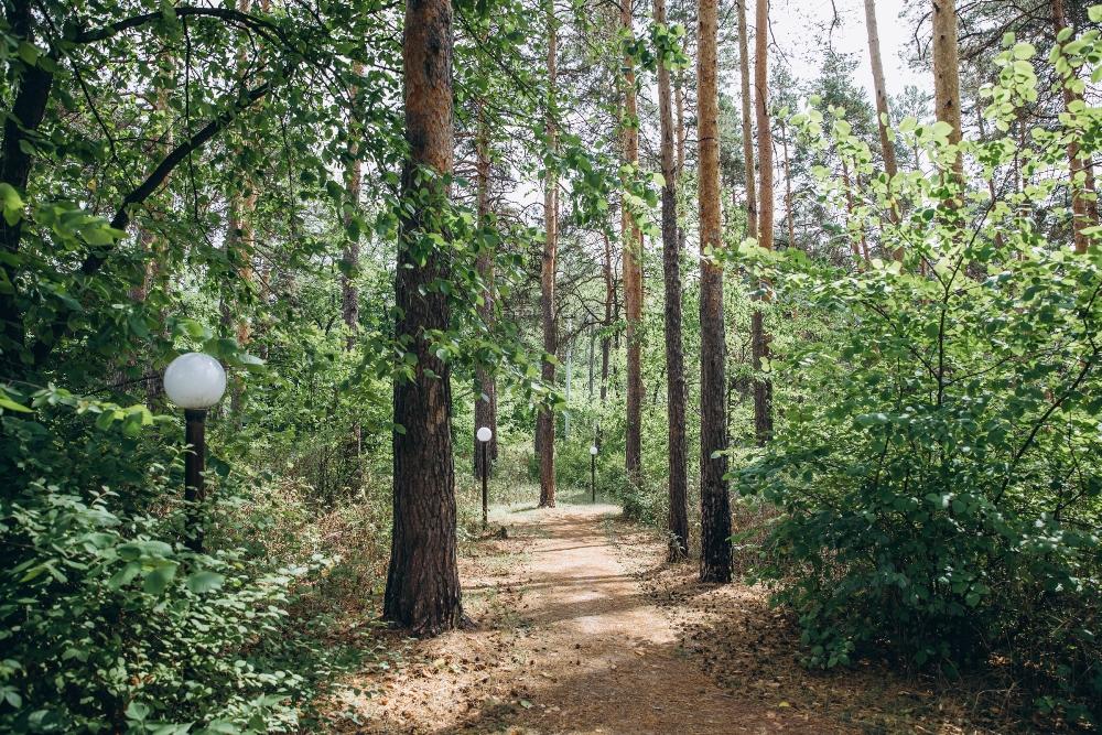 Лес располагает к прогулкам.