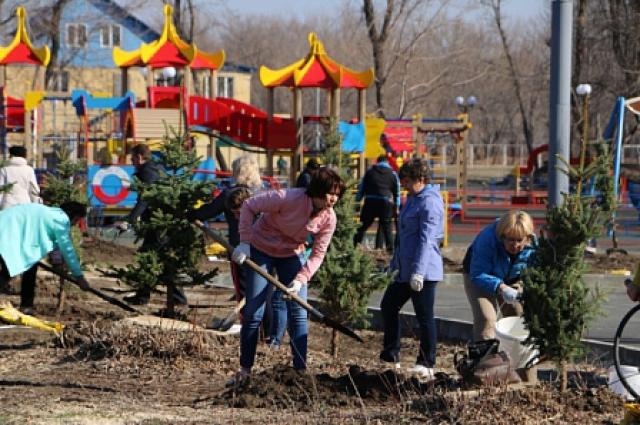 В парке Строителей Орска появились голубые ели.