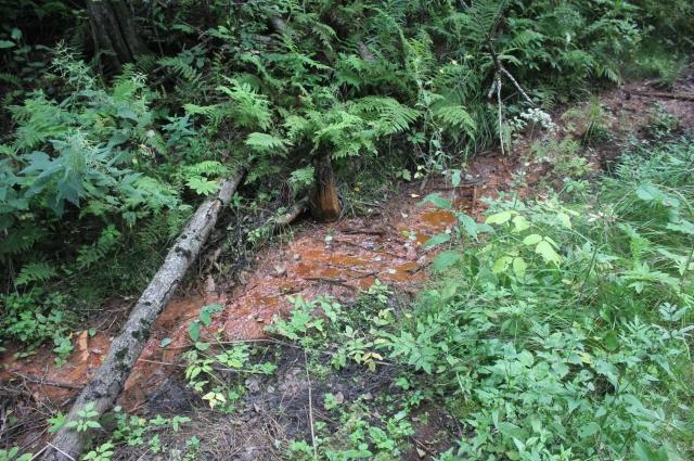 Кое-где горючее течет в реку прямо на поверхности земли. На этой полосе все растения погибли.