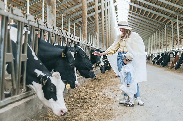 На фермах для желающих проводят экскурсии.