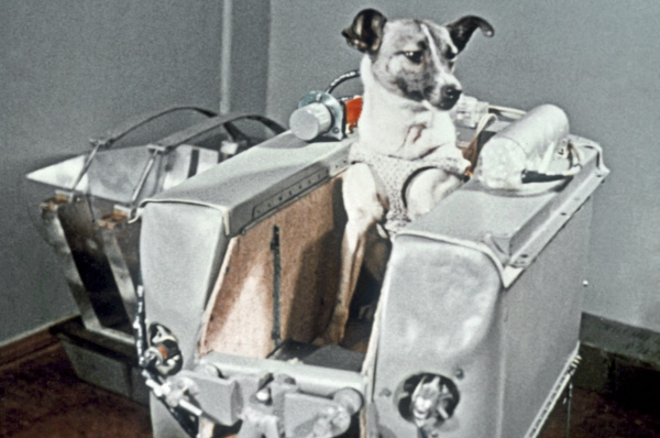 Собака Лайка в контейнере 2-го советского искусственного спутника Земли, в котором она совершила путешествие в космическое пространство 3 ноября 1957 года