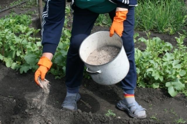 При посадке растений желательно использовать органические и минеральные удобрения.