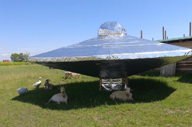 Пока нет туристов подстёпкинское НЛО облюбовали козы.