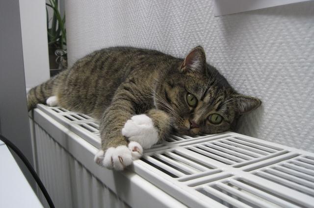 Важно обратить внимание на теплоизоляцию дома и квартиры.