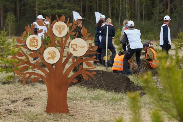 Компания посадит более 500 тыс. деревьев площади более 120 га.