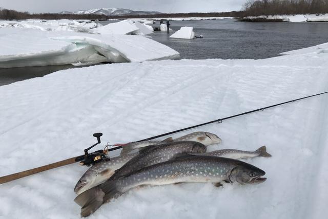 Кунжда не такая уж редкость в уловах рыбаков.