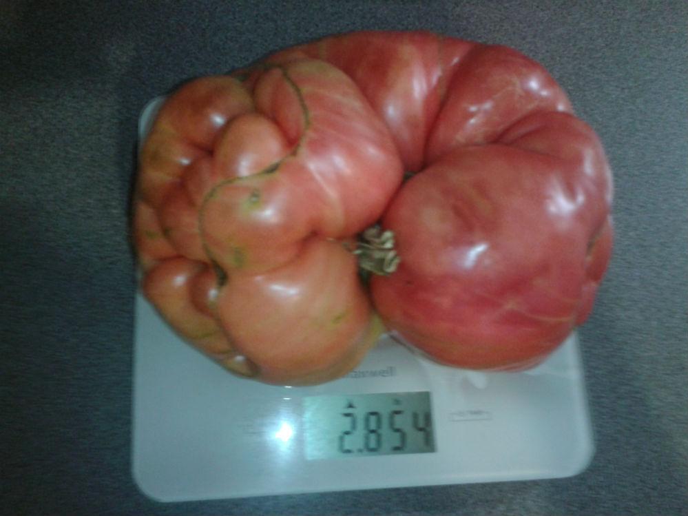 Чудо-помидор от Оксаны Ушкур, без малого - 3 кг.
