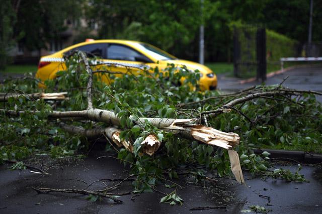 Поваленные ураганом деревья в Москве.