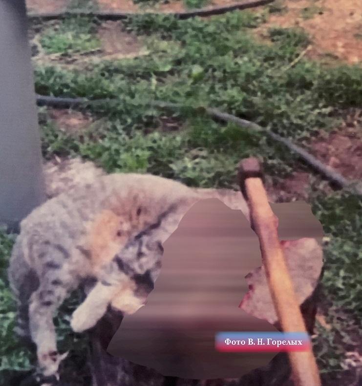 Кот Кокос и кошка Мура были зарублены топором.