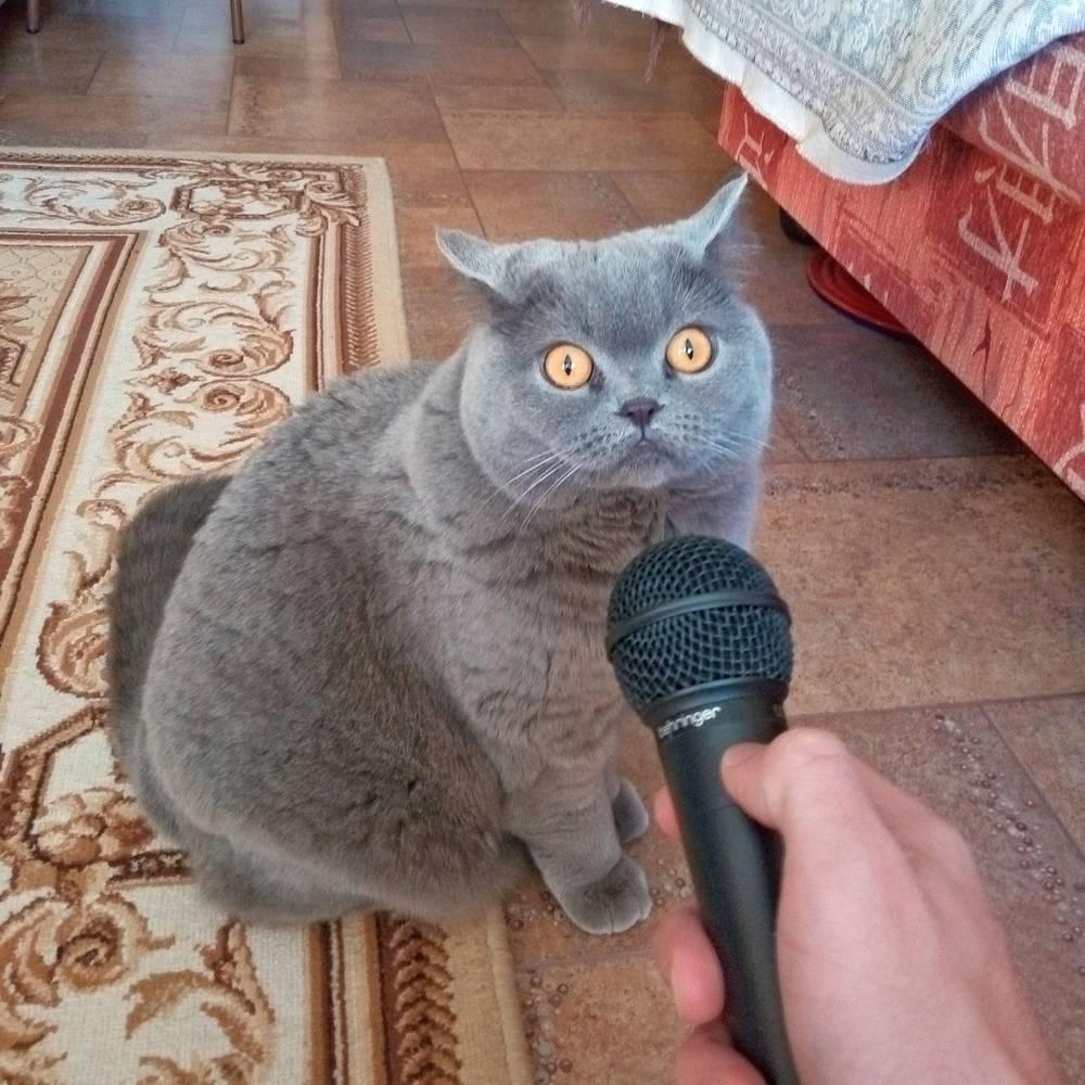 Кошка Фрейя