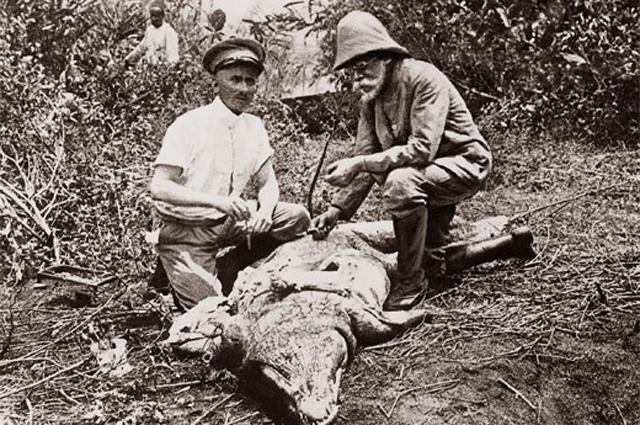 Роберт Кох (справа) с хирургом осматривают крокодила. В крови крокодила возбудитель сонной болезни (африканский трипаносомоз).