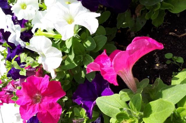 цветы, тюмень