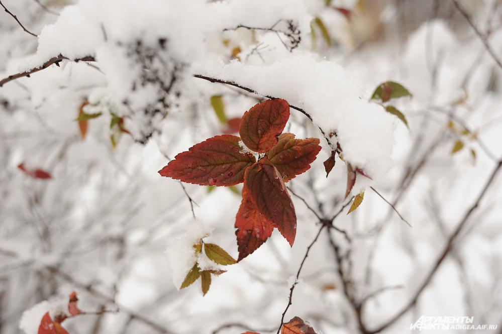 Красота и совершенно неожиданные кадры поджидают вас на каждом шагу в зимнем лесу.