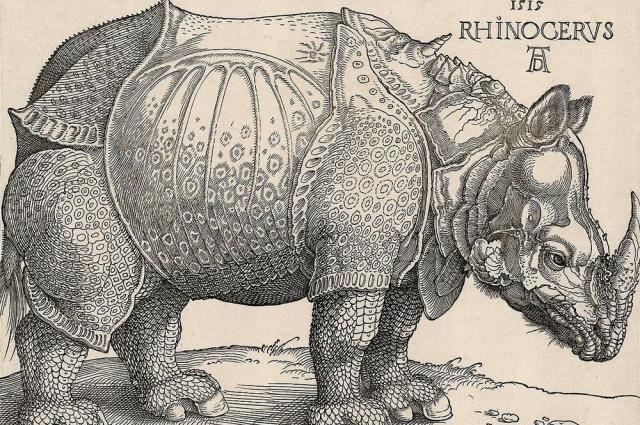 На ксилографии Дюрера носорог был изображен с двумя рогами.