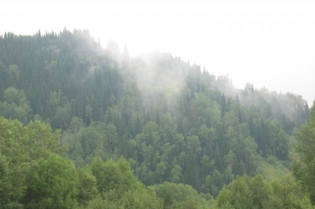 Дорога к Убе проходит по лесу.