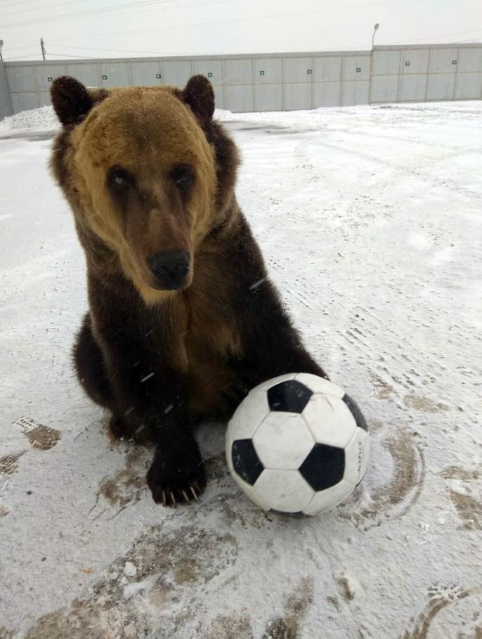 Медведь Тима