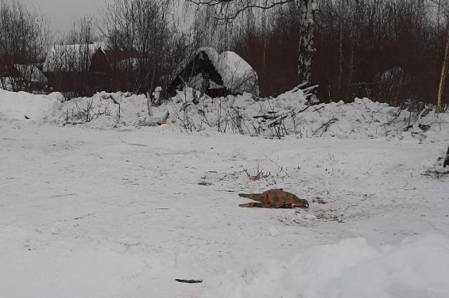 Окоченевшее тело животного обнаружили только утром.