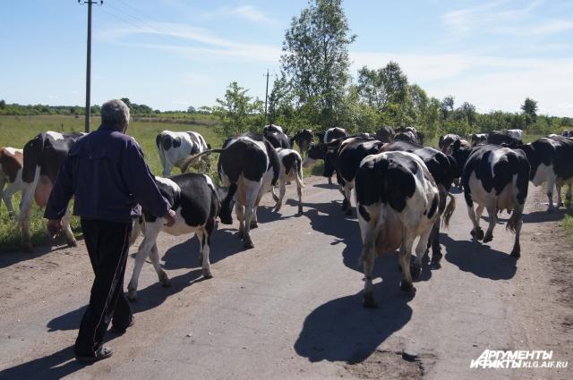 В маленьком поселке Рожково Гурьевского поселились пять семей езидов.
