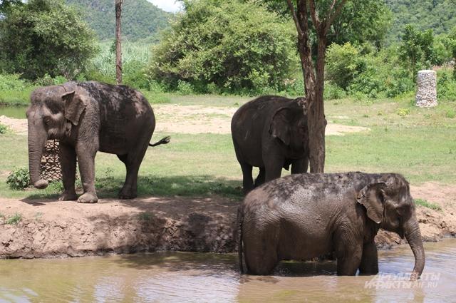 Слоны, Таиланд