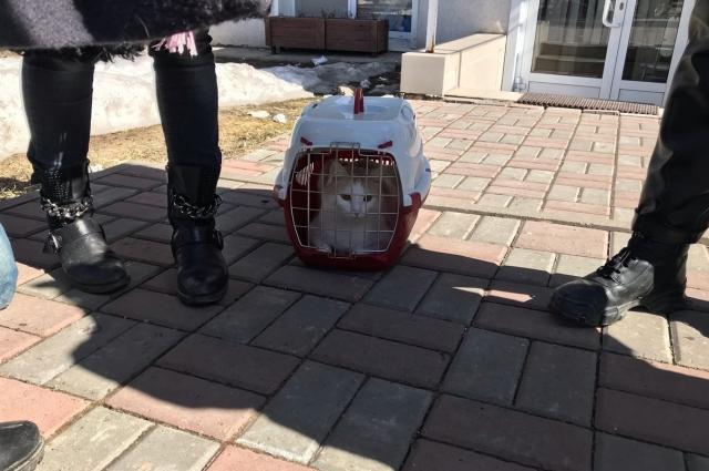 После того, как скандал вышел на федеральный уровень, кошек освободили