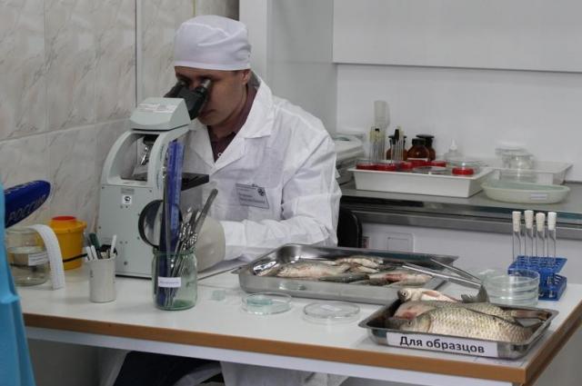 Исследование рыбы в лаборатории.