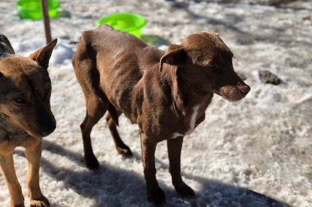В мае 2018 года начнёт работать временный центр безнадзорных животных.