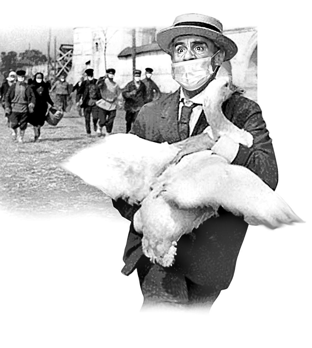 Для иных и сегодня обычный гусь – предел мечтаний. Использован кадр из фильма «Золотой телёнок», 1968 г.