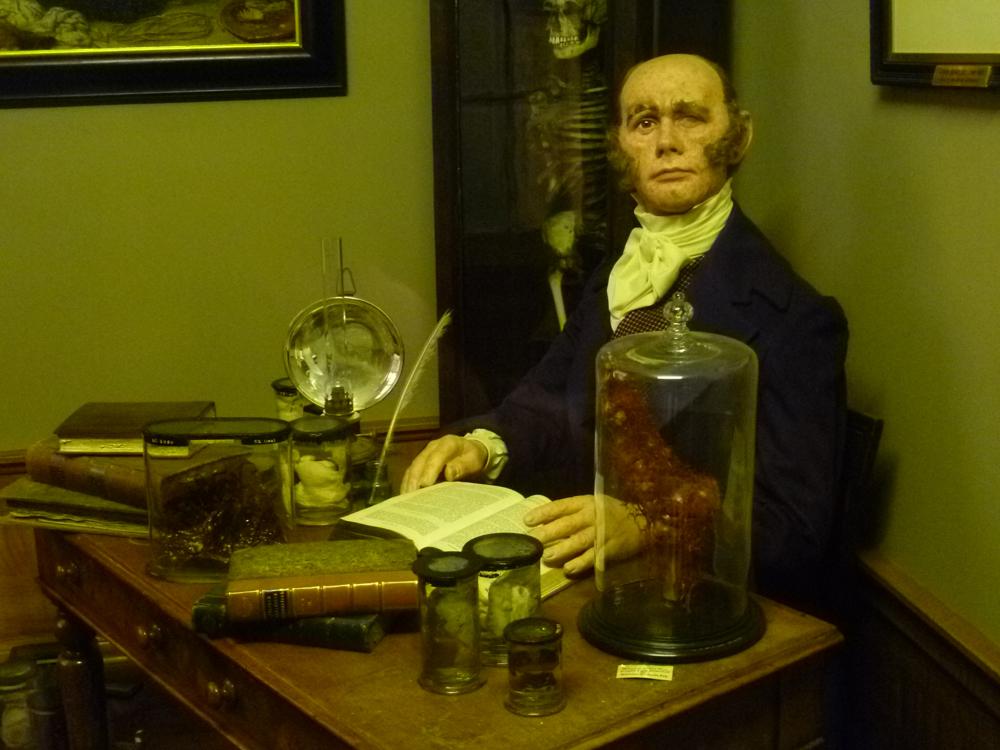 Восковая фигура доктора Роберта Нокса — экспонат музея Королевского колледжа хирургов Эдинбурга.