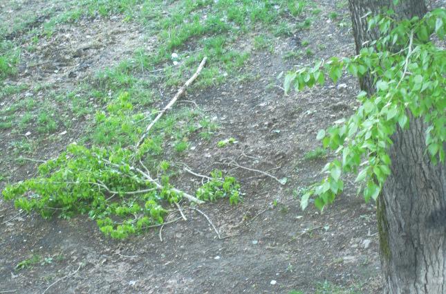 дерево, ветки, дерево упало