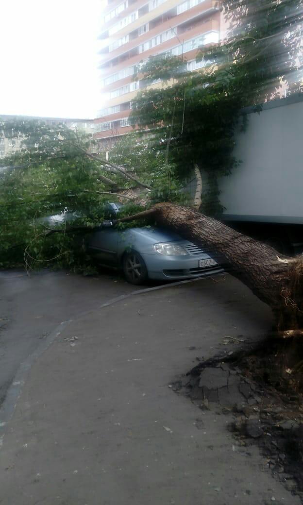 Новосибирцы присылали фотографии поваленных деревьев.