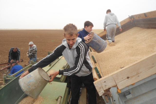 Мальчишки уже собрали 187 тонн озимой пшеницы.