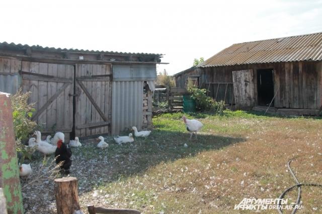 Сейчас Гальцов живет один в своем доме, держит небольшое хозяйство из птицы.