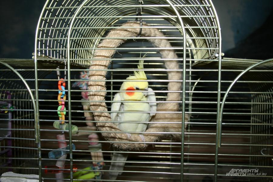 Один из обитателей зимнего сада ИК-13 - попугай Кеша..